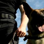 Vale a pena ter um cão de guarda?