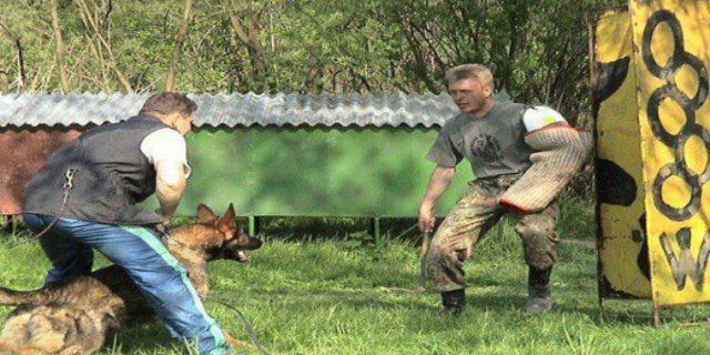 Vale a pena adestrar um cão para cão de guarda?